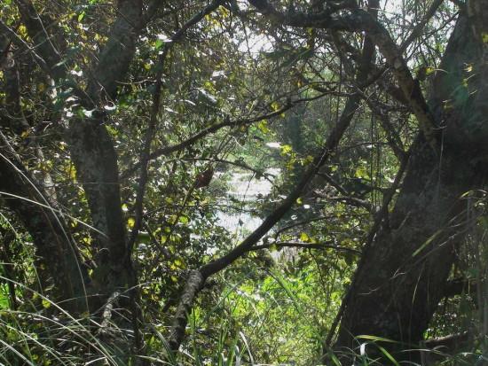 Laguna Macaes/Grebe Pond
